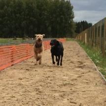 juoksurata_isot_koirat